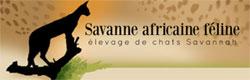Savane Africaine Féline (Elevage de Chats)